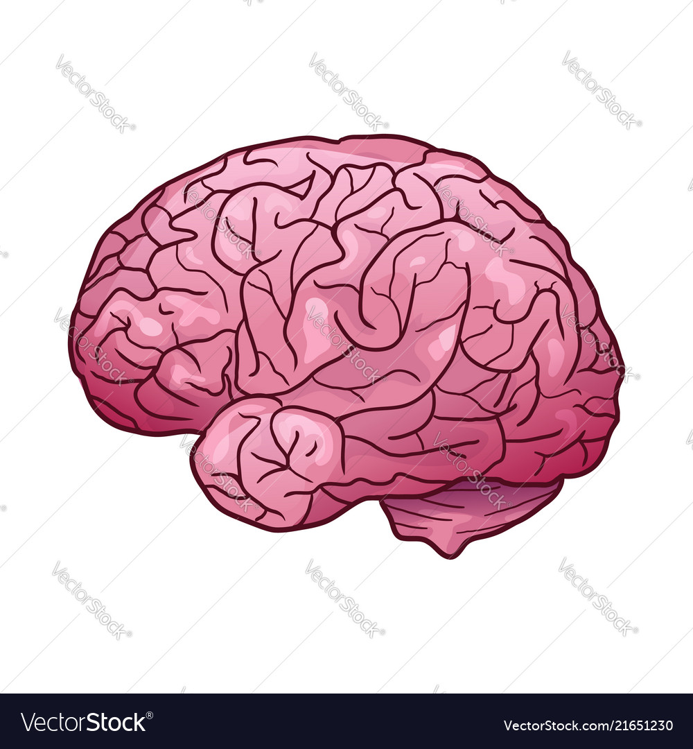 Cartoon Of A Human Brain With Royalty Free Vector Image