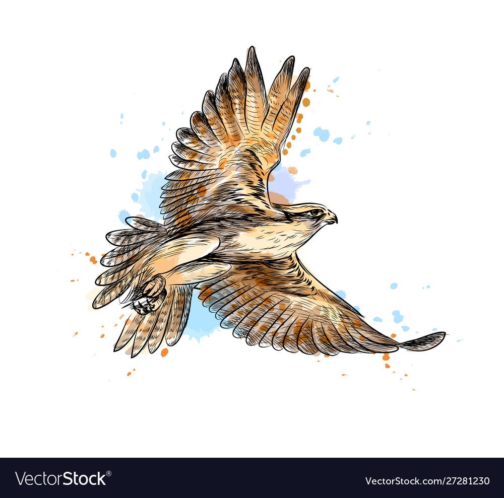 Falcon in flight from a splash watercolor hand