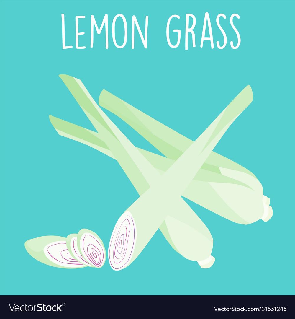 Fresh lemon grass plant and slice