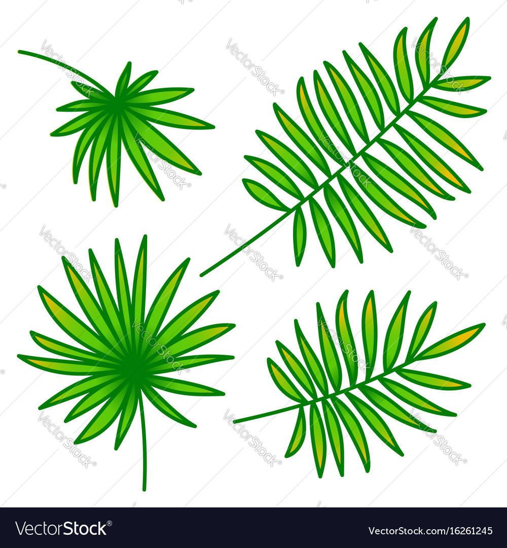 Palm leaf set on white background