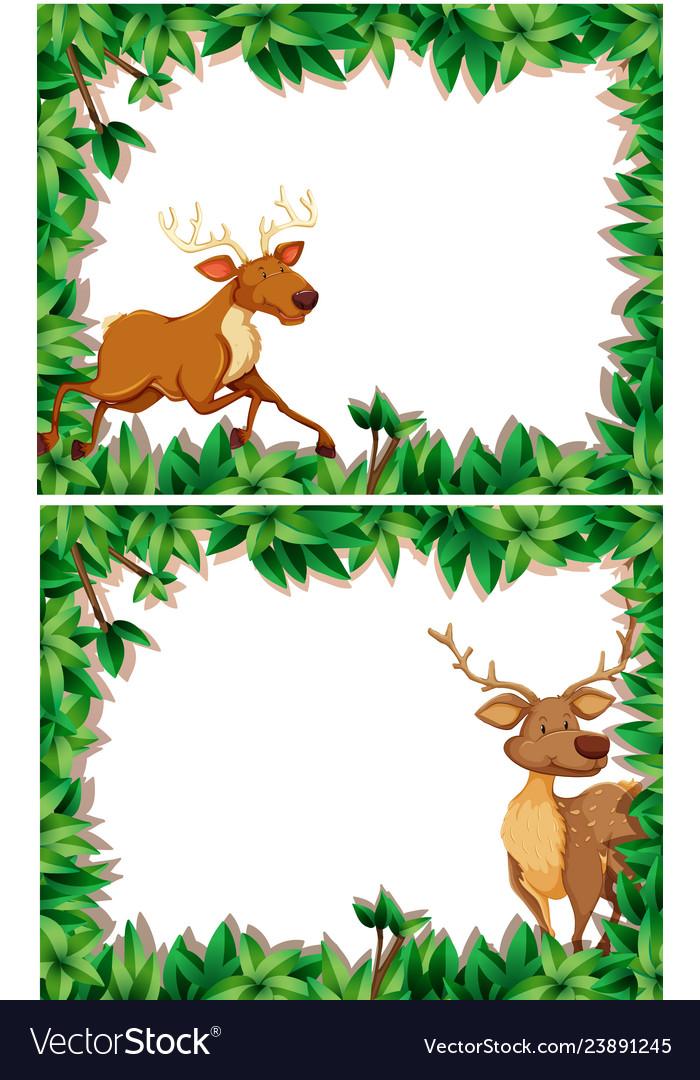Set of deer in nature frame