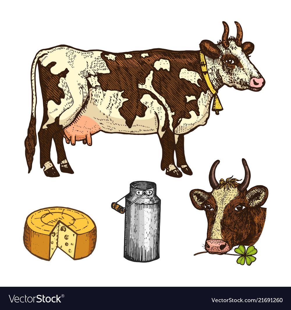 Set of milk food dairy products yogurt and