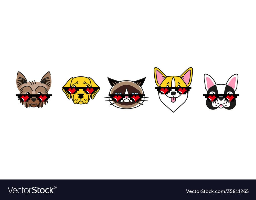 Bulldog corgi labrador terrier and grumpy cat