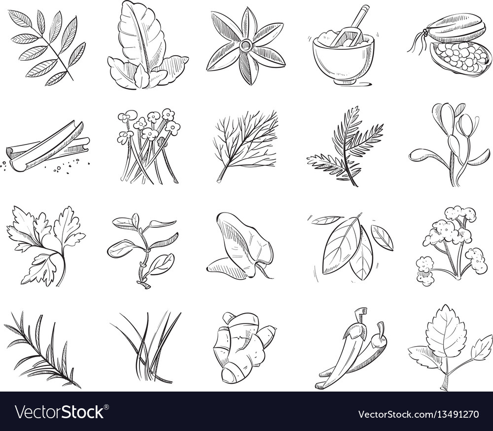 Vintage hand drawn herbs and spices sketch