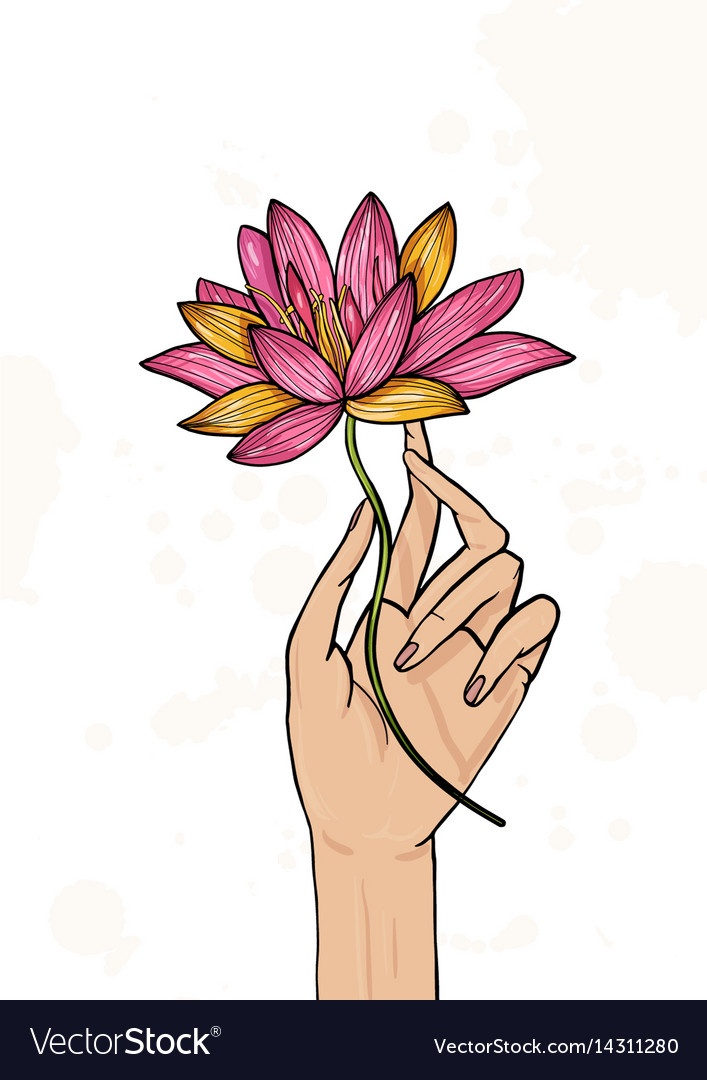 Hand Holding Lotus Flower Colorful Hand Drawn Vector Image