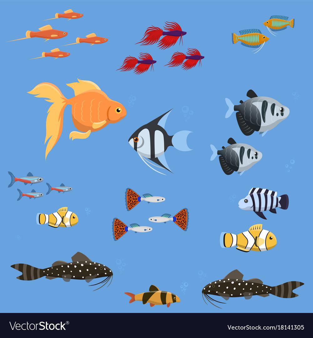 Exotic tropical aquarium fish different colors