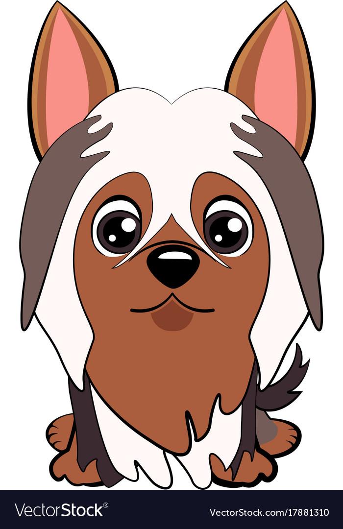 Dog silky cartoon