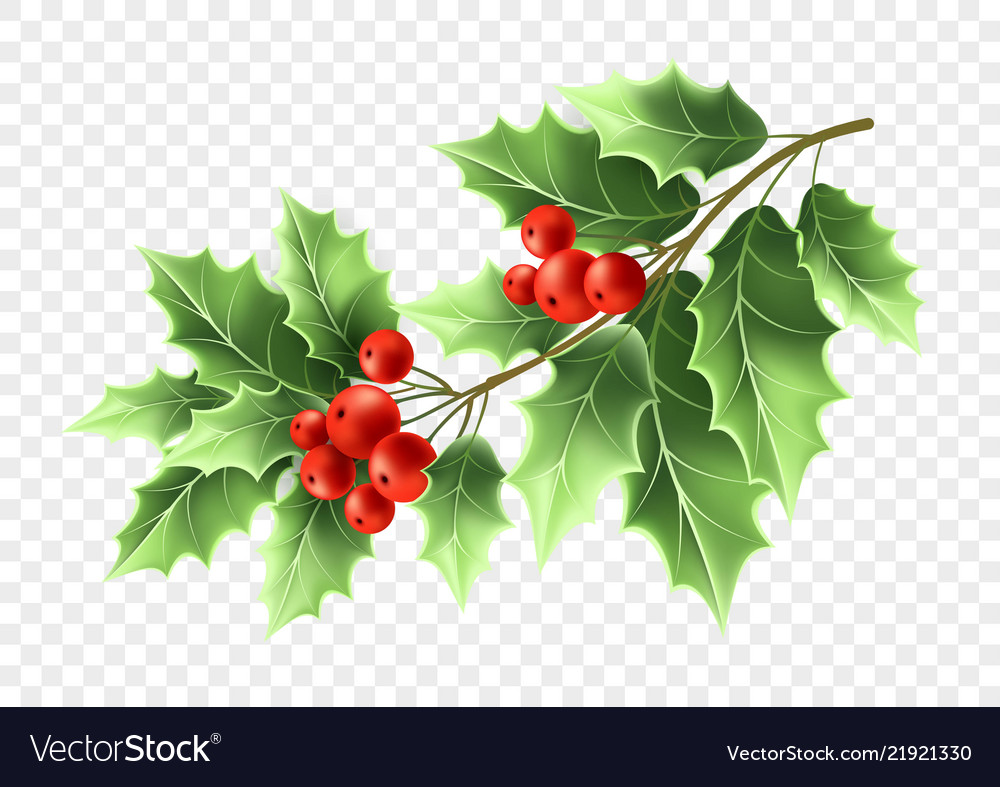 Christmas Holly Tree Branch Realistic Royalty Free Vector