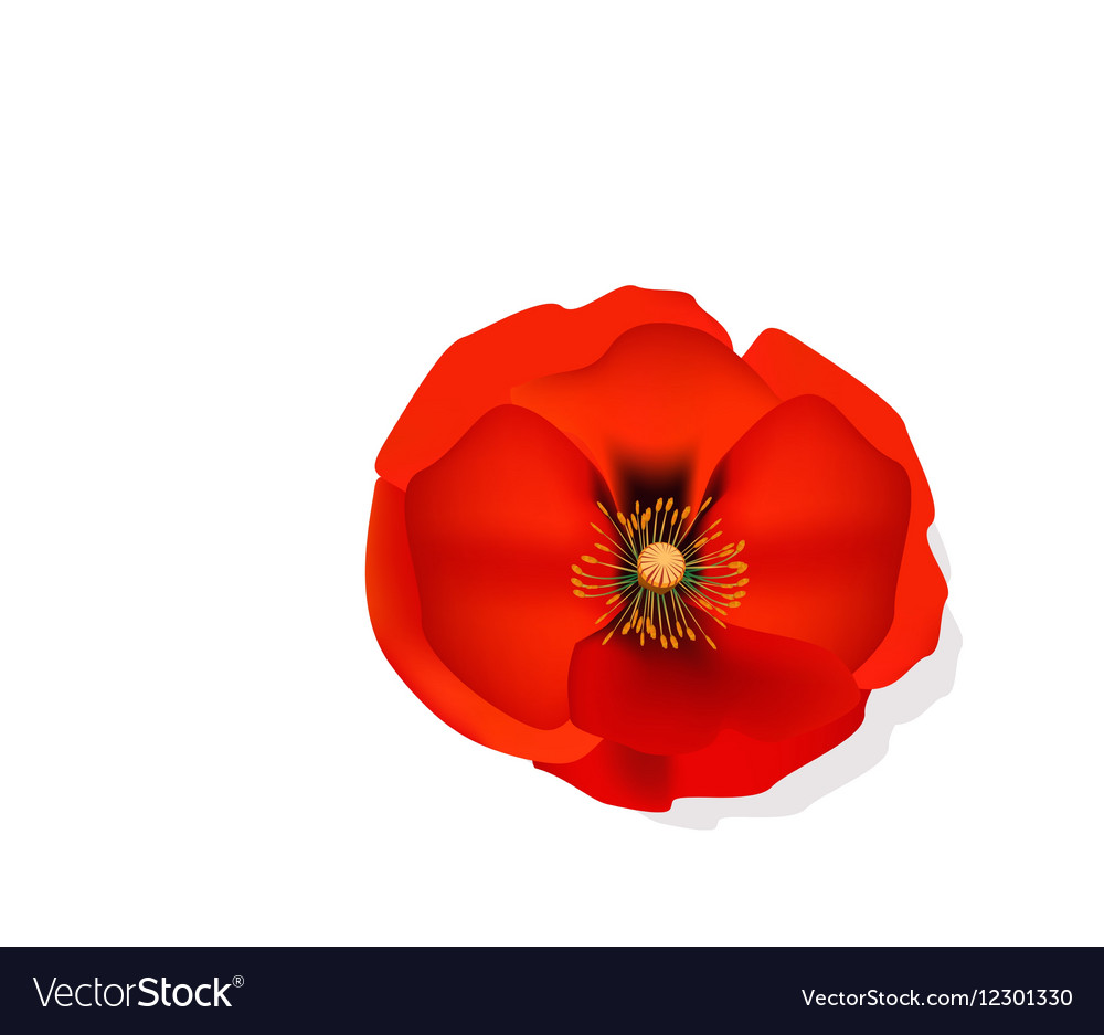 Red romantic poppy flower royalty free vector image red romantic poppy flower vector image mightylinksfo