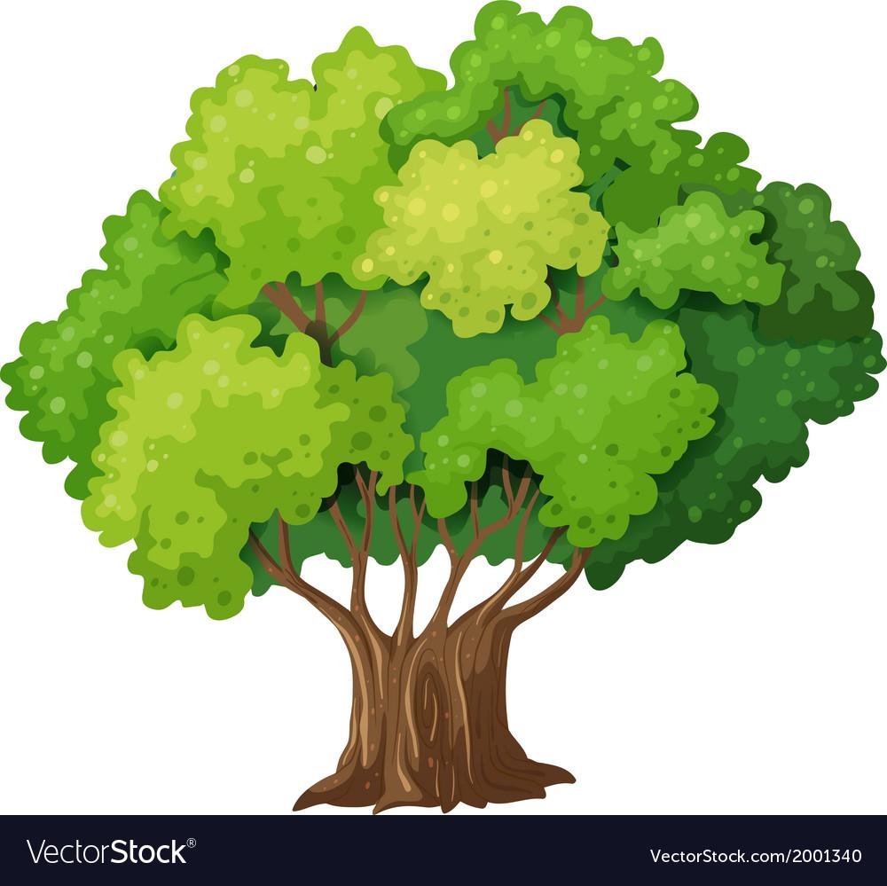 A big old tree vector image