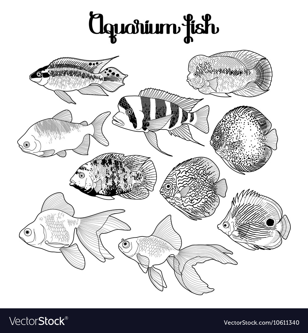Graphic Aquarium Fish Royalty Free Vector Image