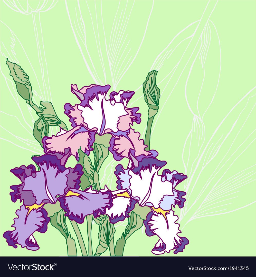 Background with blue pink irises vector image