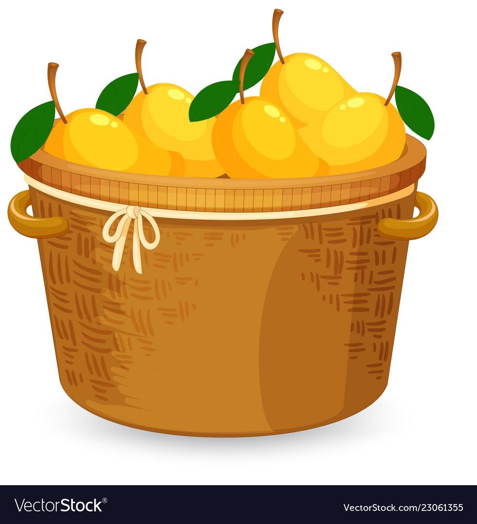 get cheap ever popular cozy fresh A basket of mango