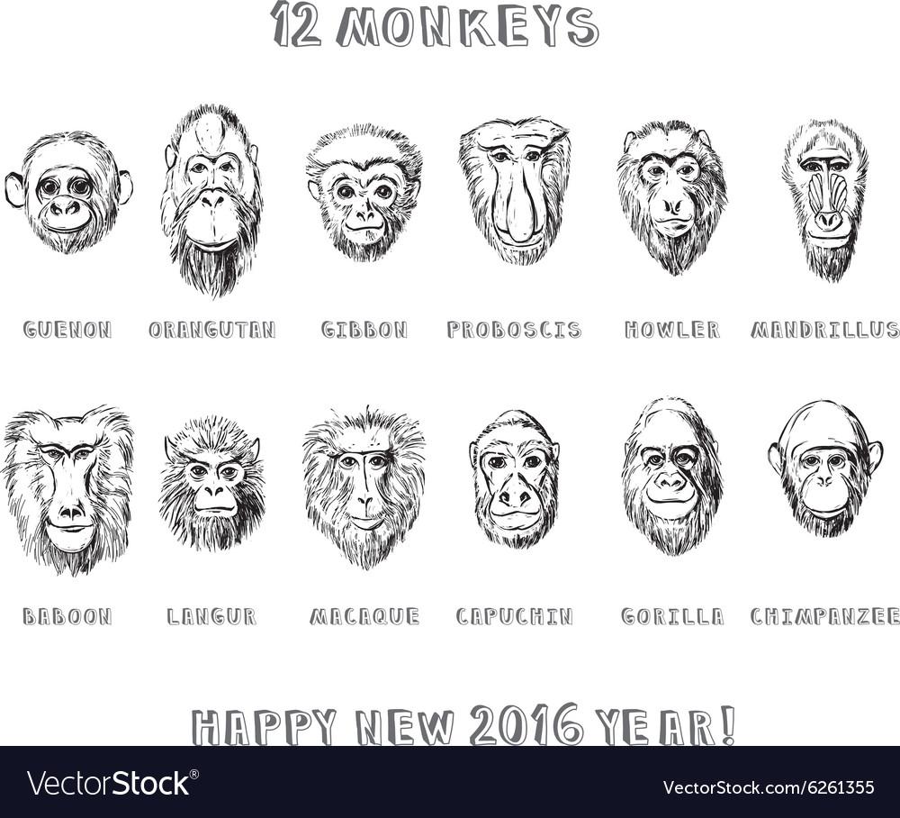 Monkeys set