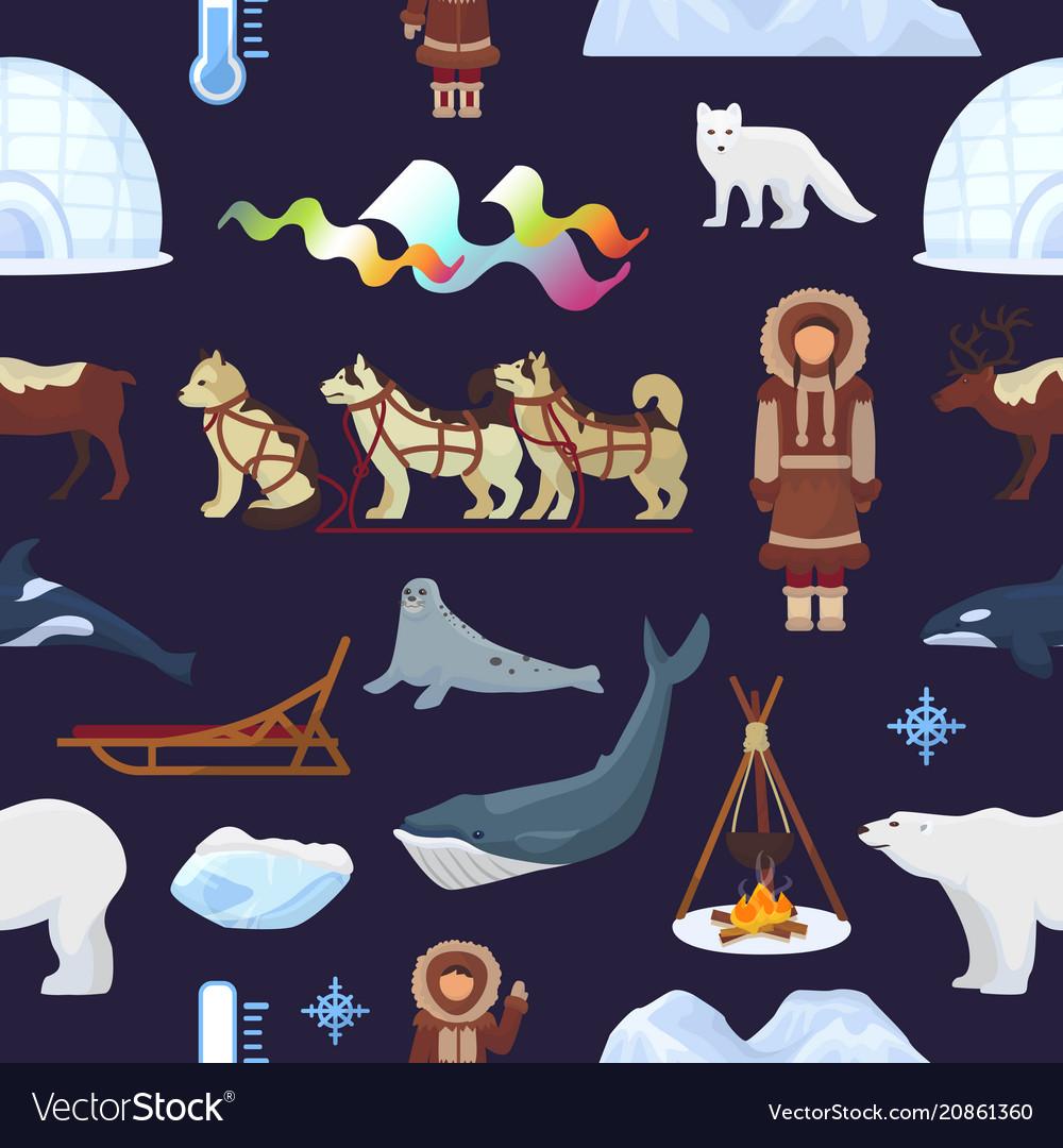 Arctic northern borealis norway and husky