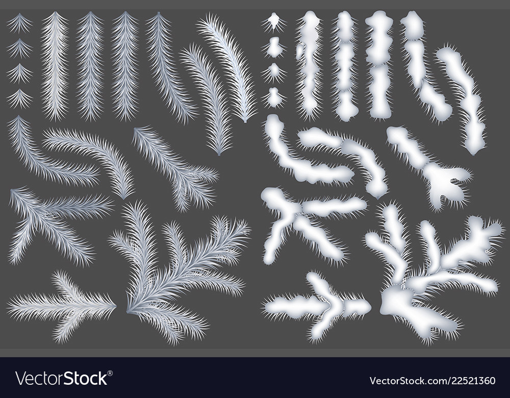 Set of white coniferous branches