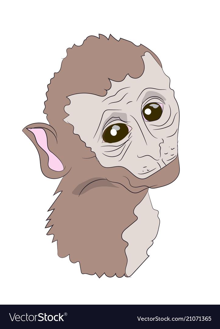 Monkey portrait vector image