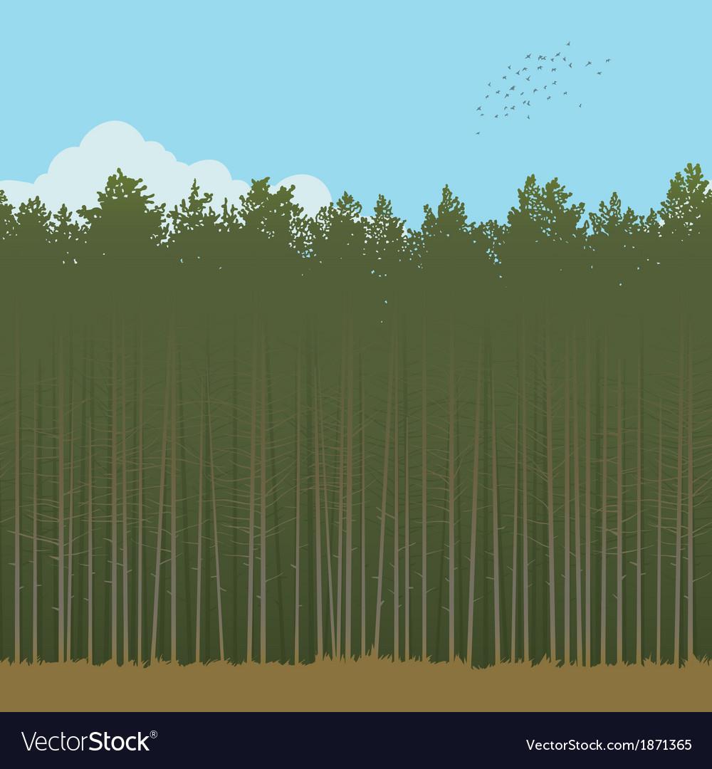 Pinewood vector image