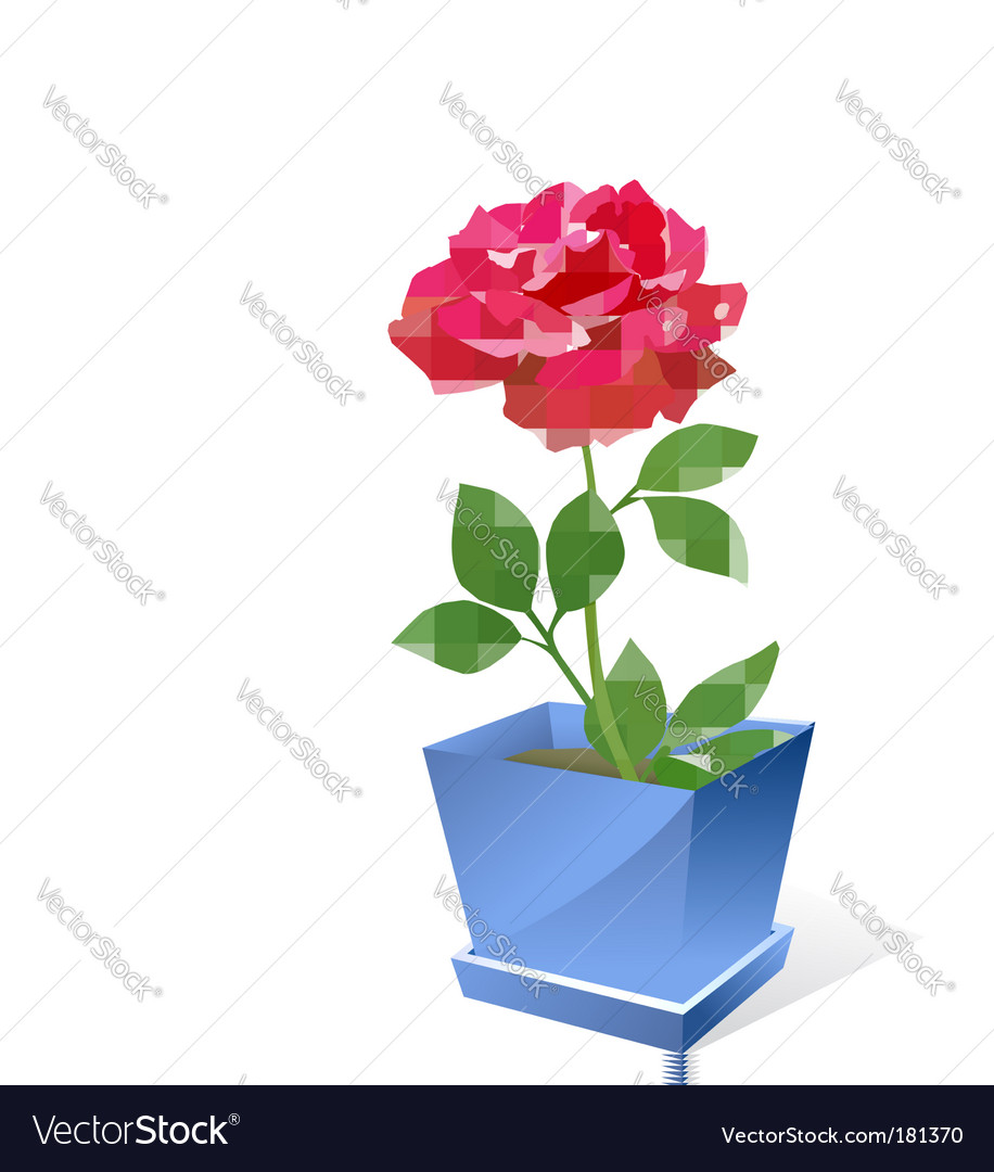 Red rose flower in pot vector image