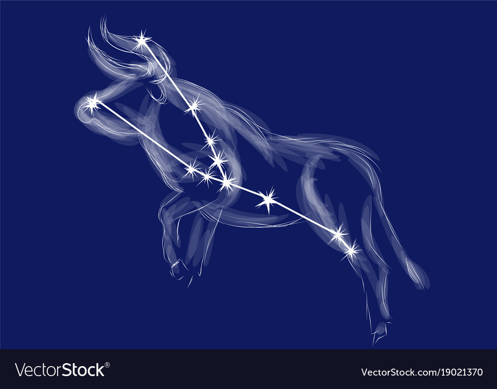 Zodiac sign-taurus vector image