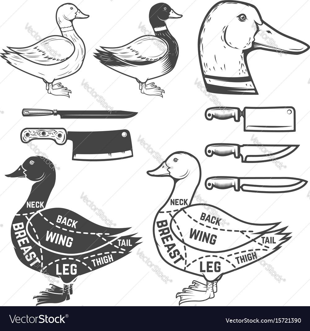 Duck butcher diagram design element for poster