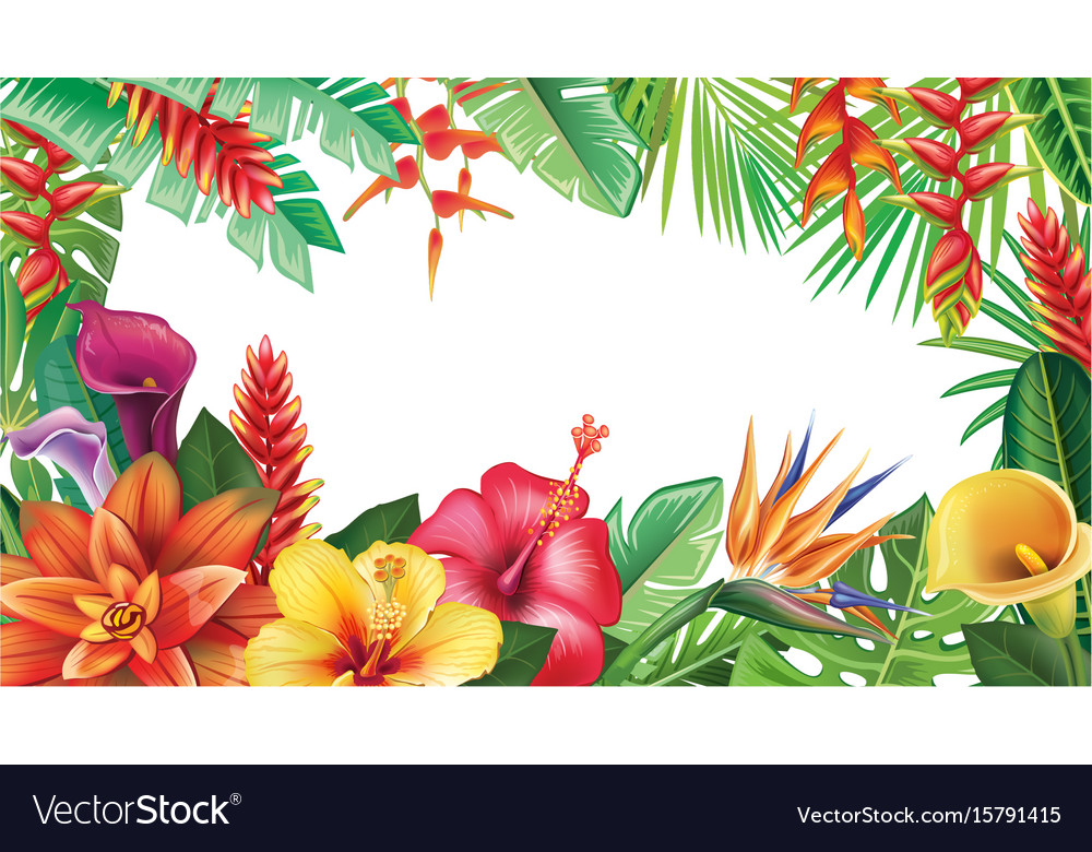 Banner From Tropical Flowers Royalty Free Vector Image