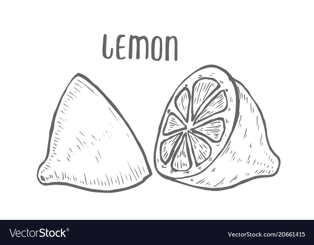 Lemon set hand drawn