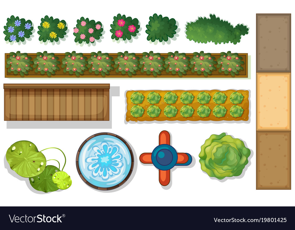 Top View Of Plants And Pond In Garden Vector Image