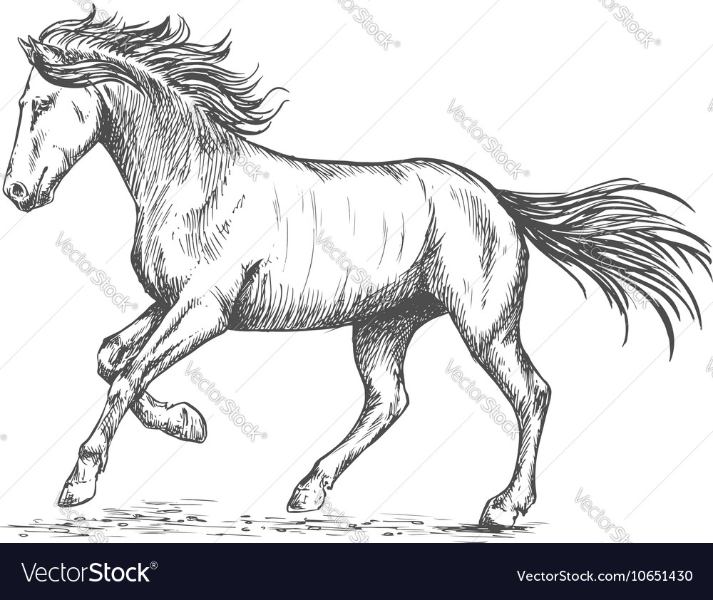 Prancing horse with stmping hoof portrait vector image