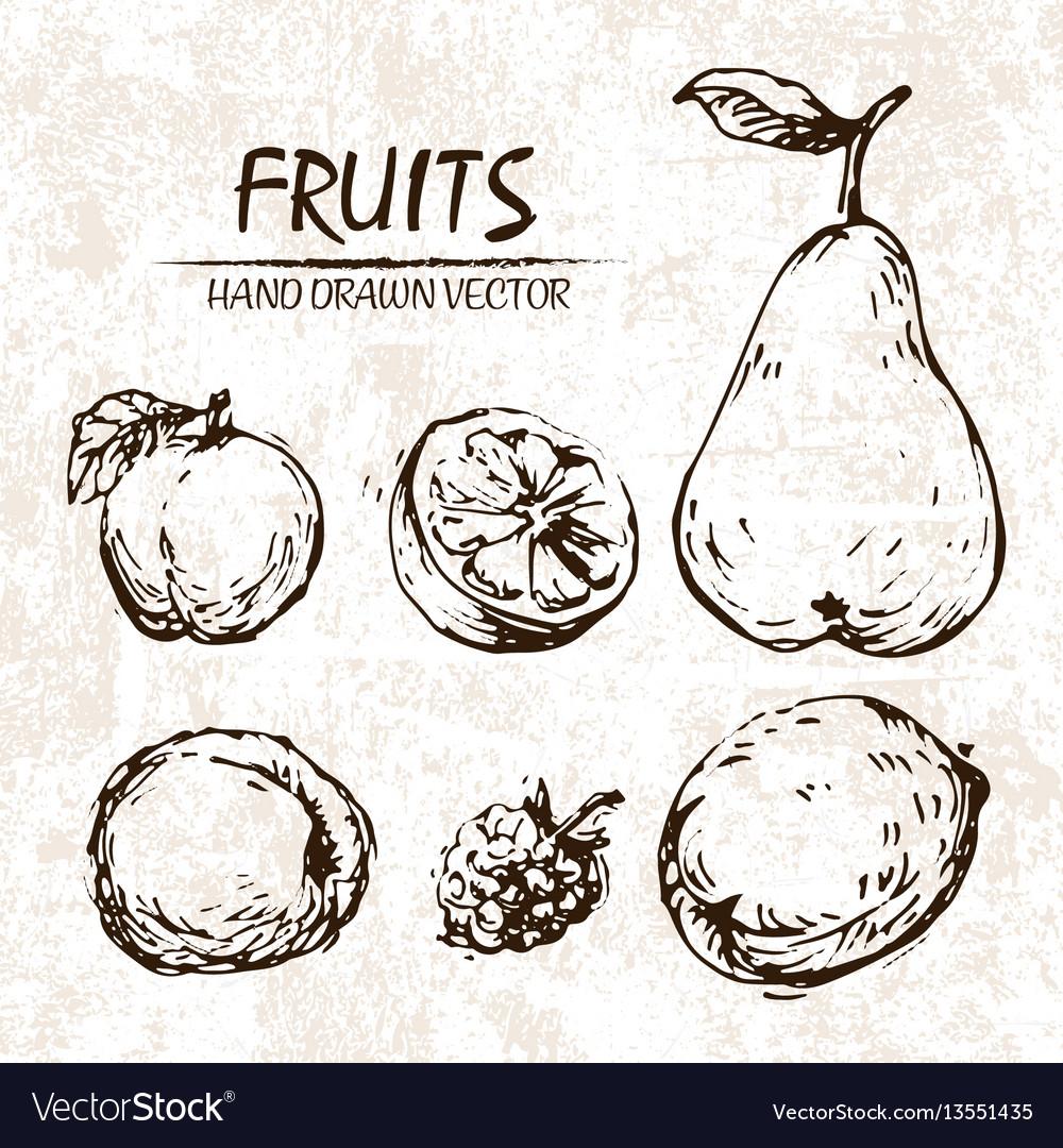 Digital detailed fruit hand drawn