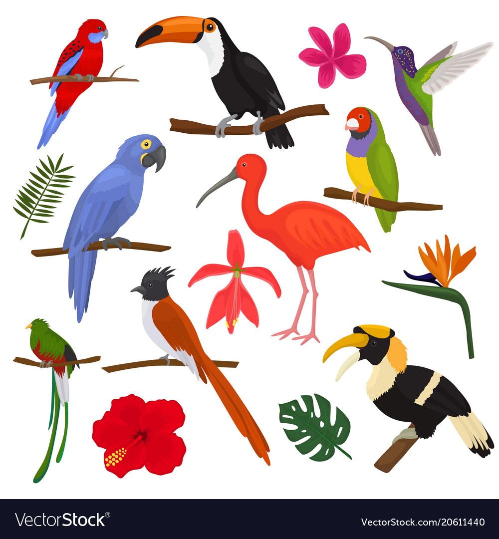 Tropical birds exotic parrot toucan and