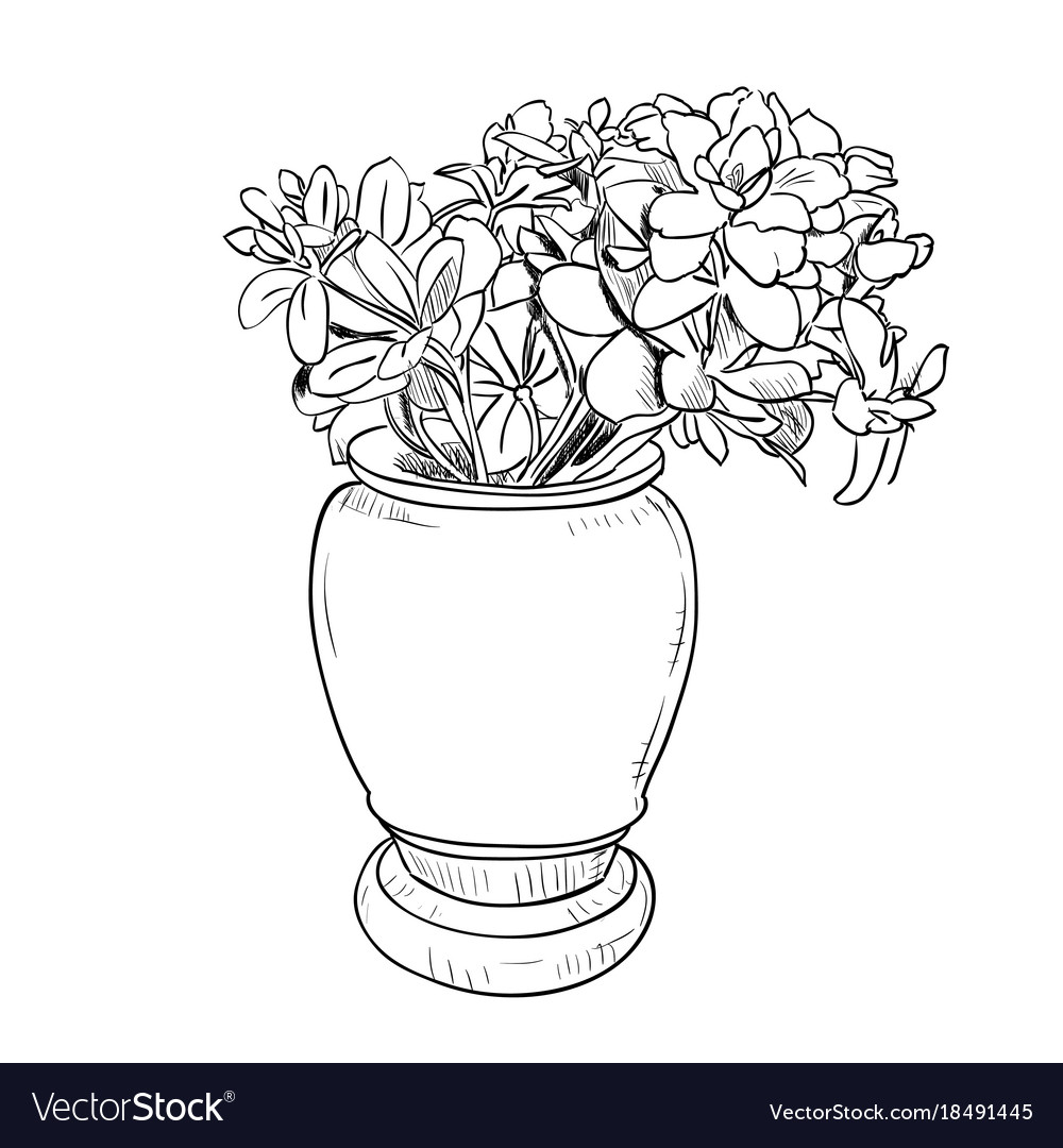 Drawing sketch of vase with flowers vector image  sc 1 st  VectorStock & Drawing sketch of vase with flowers Royalty Free Vector