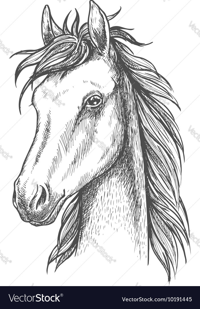 Sketched horse head icon for t-shirt print design vector image