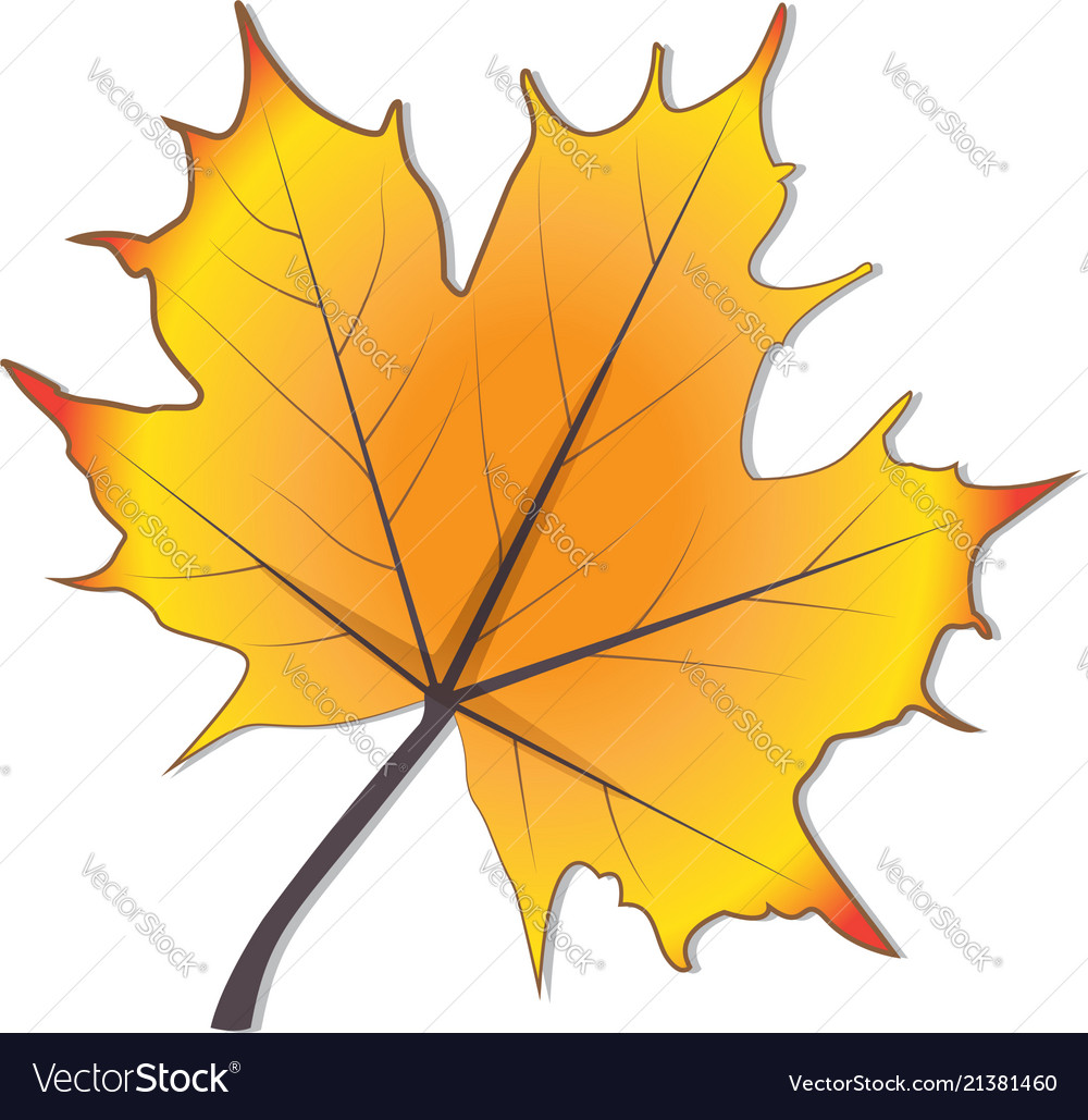 Autumn season stylized leaf icon design