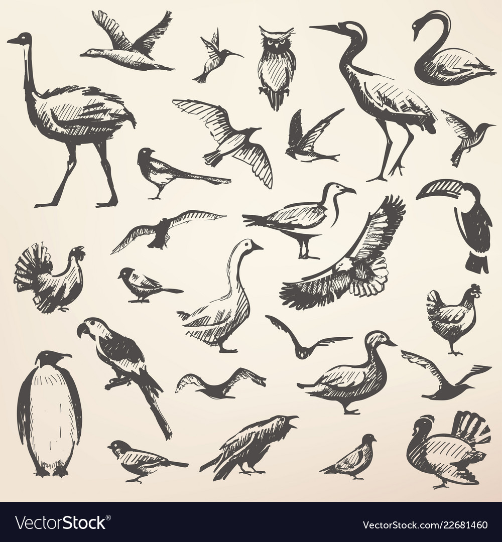 Birds big hand drawn collection silhouettes in