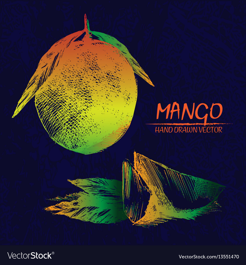 Digital detailed mango hand drawn vector image