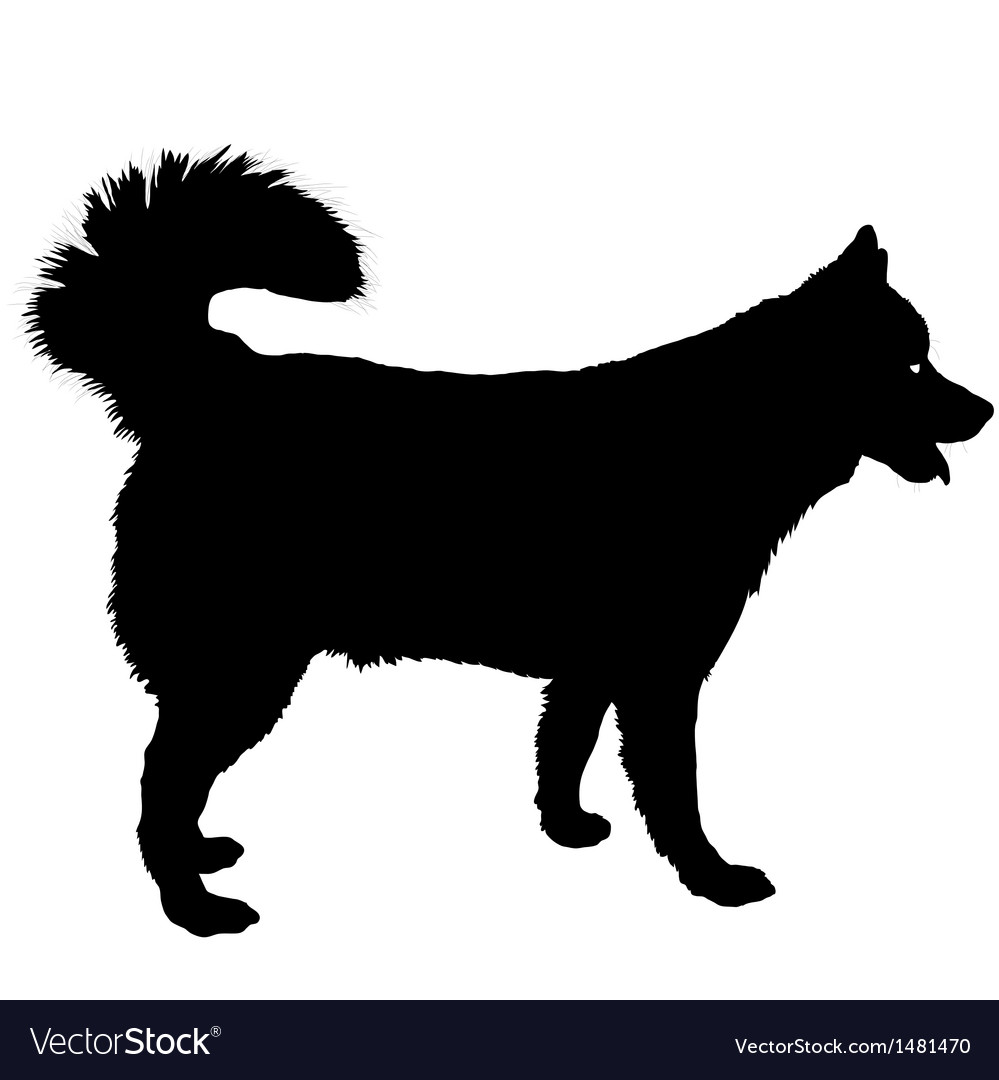 Husky Silhouette vector image