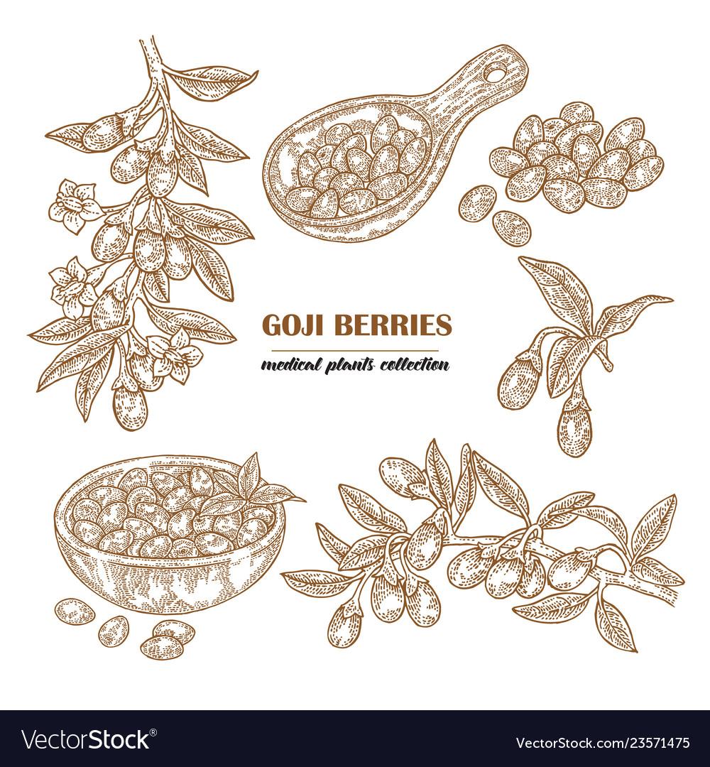 Set goji berries on a branch hand drawn medical