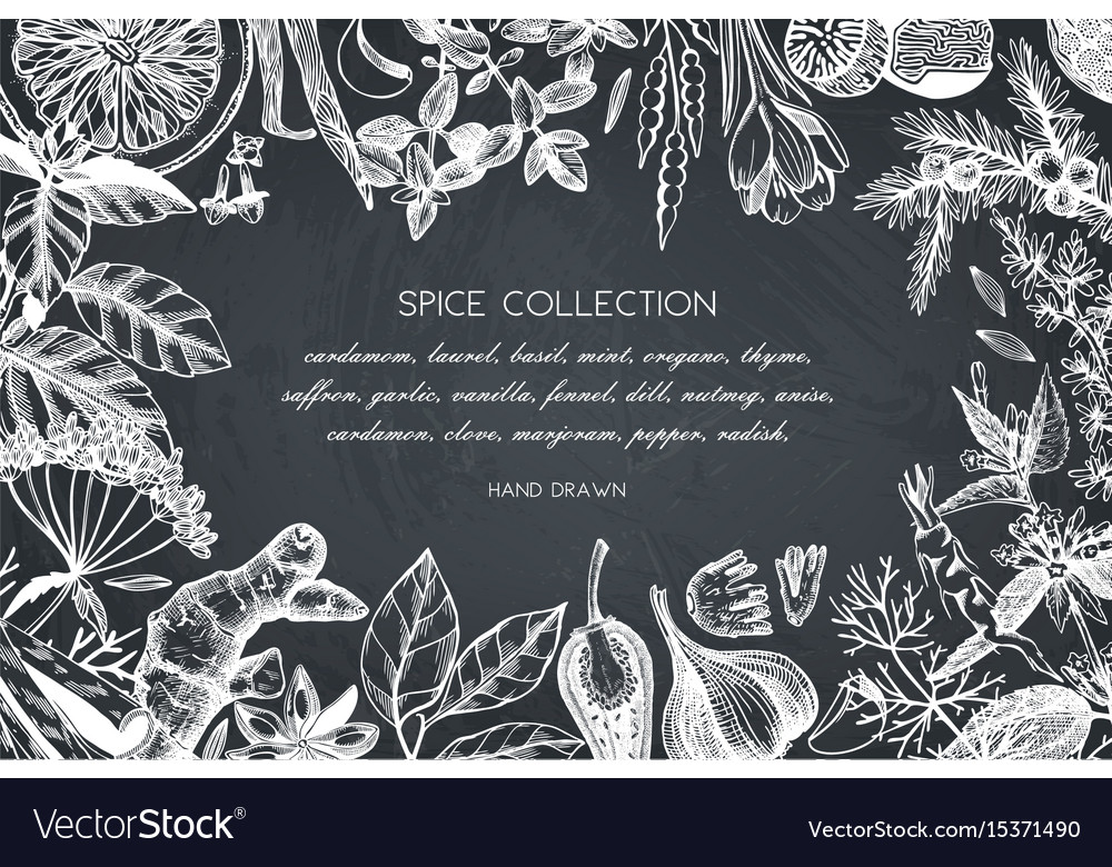 Hand drawn spices and herbs design vector image