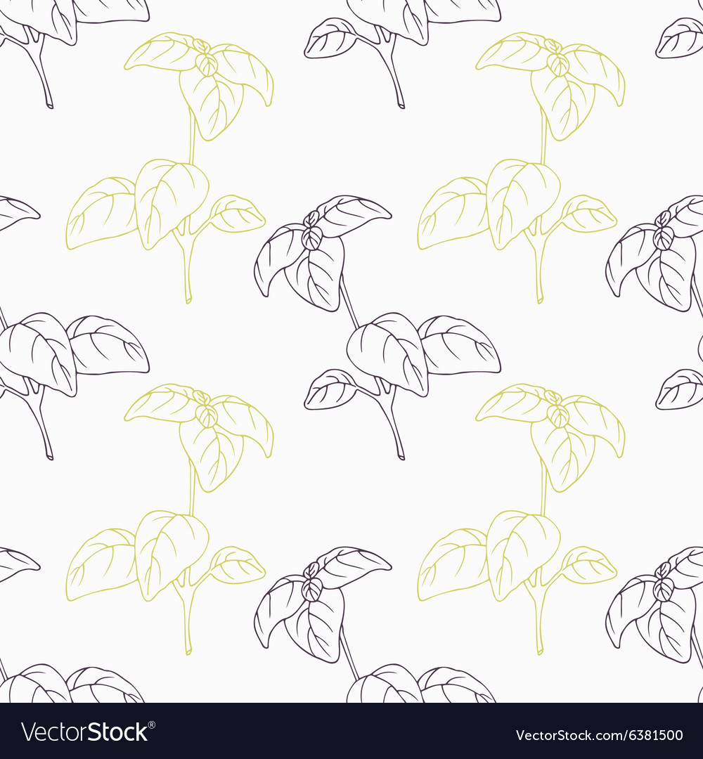 Hand drawn basil branch stylized black and green vector image