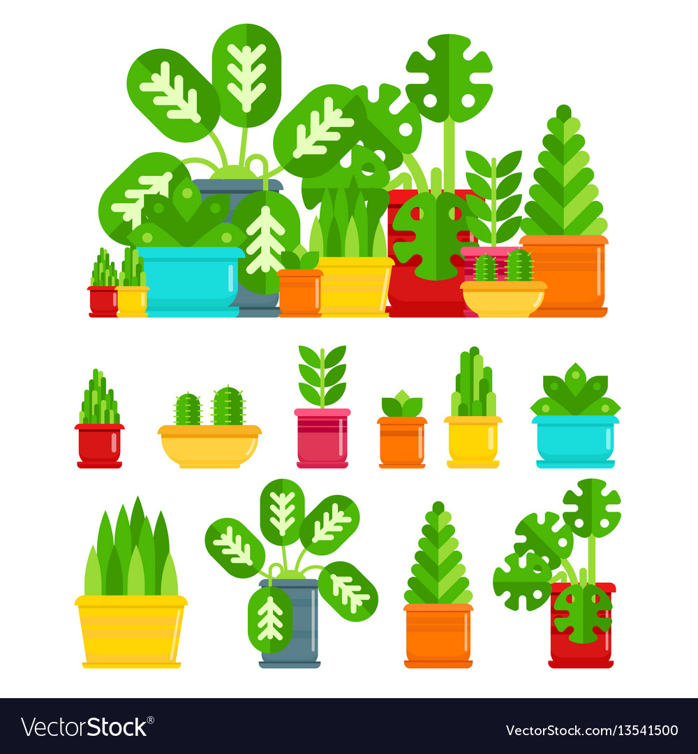 Set of house plants colourful plants isolated
