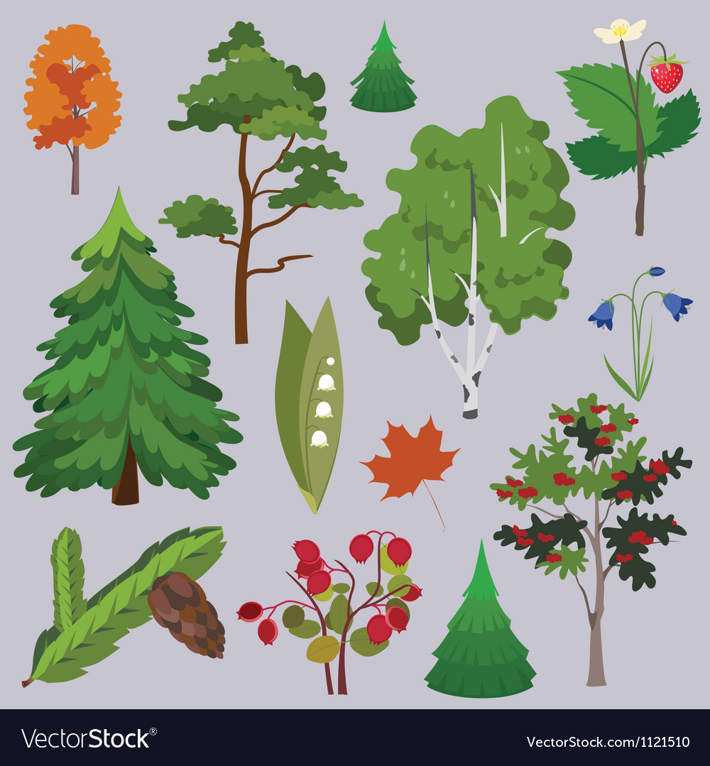Set of forest plants and trees