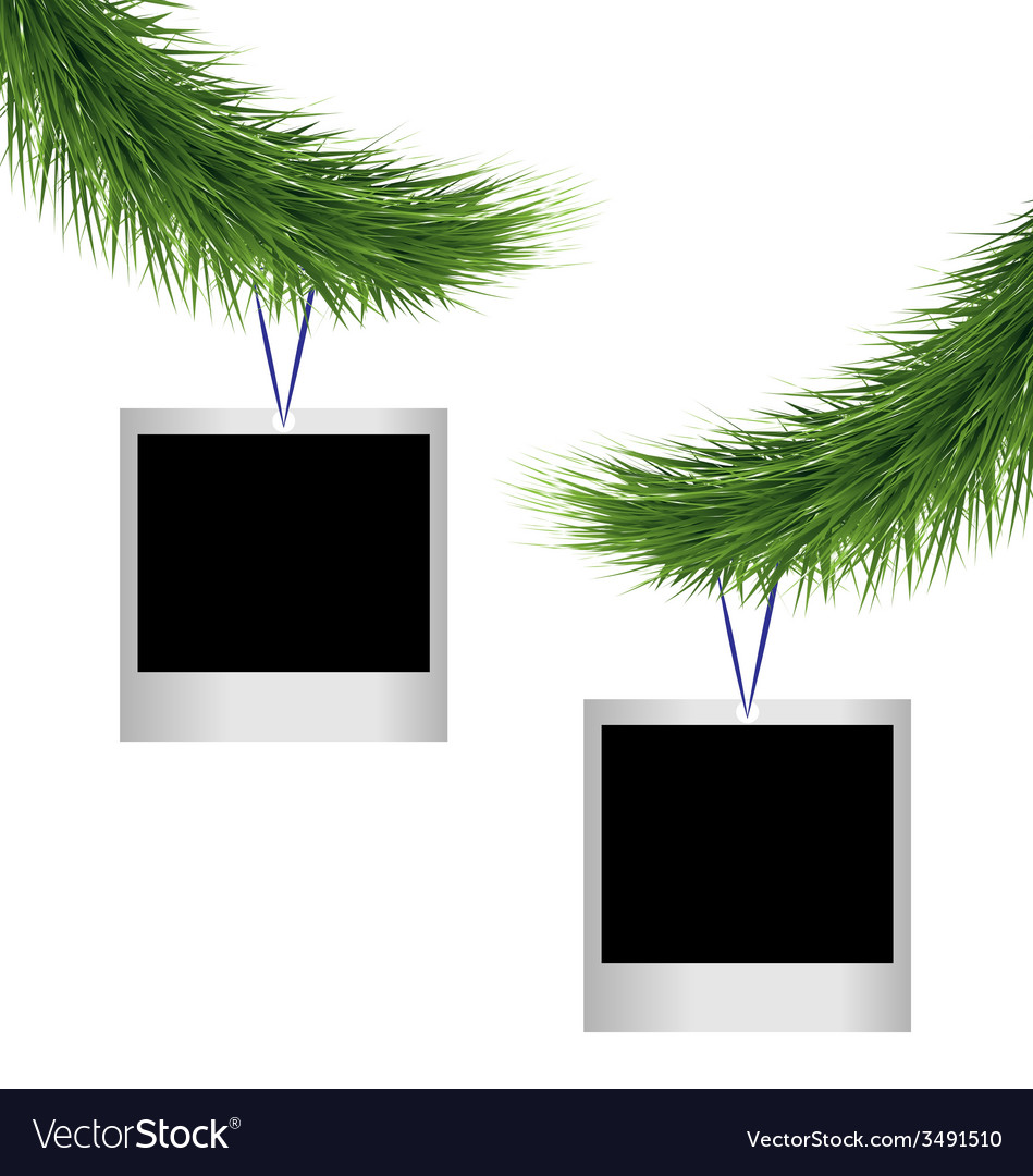 Two photoframes on pine branches vector image