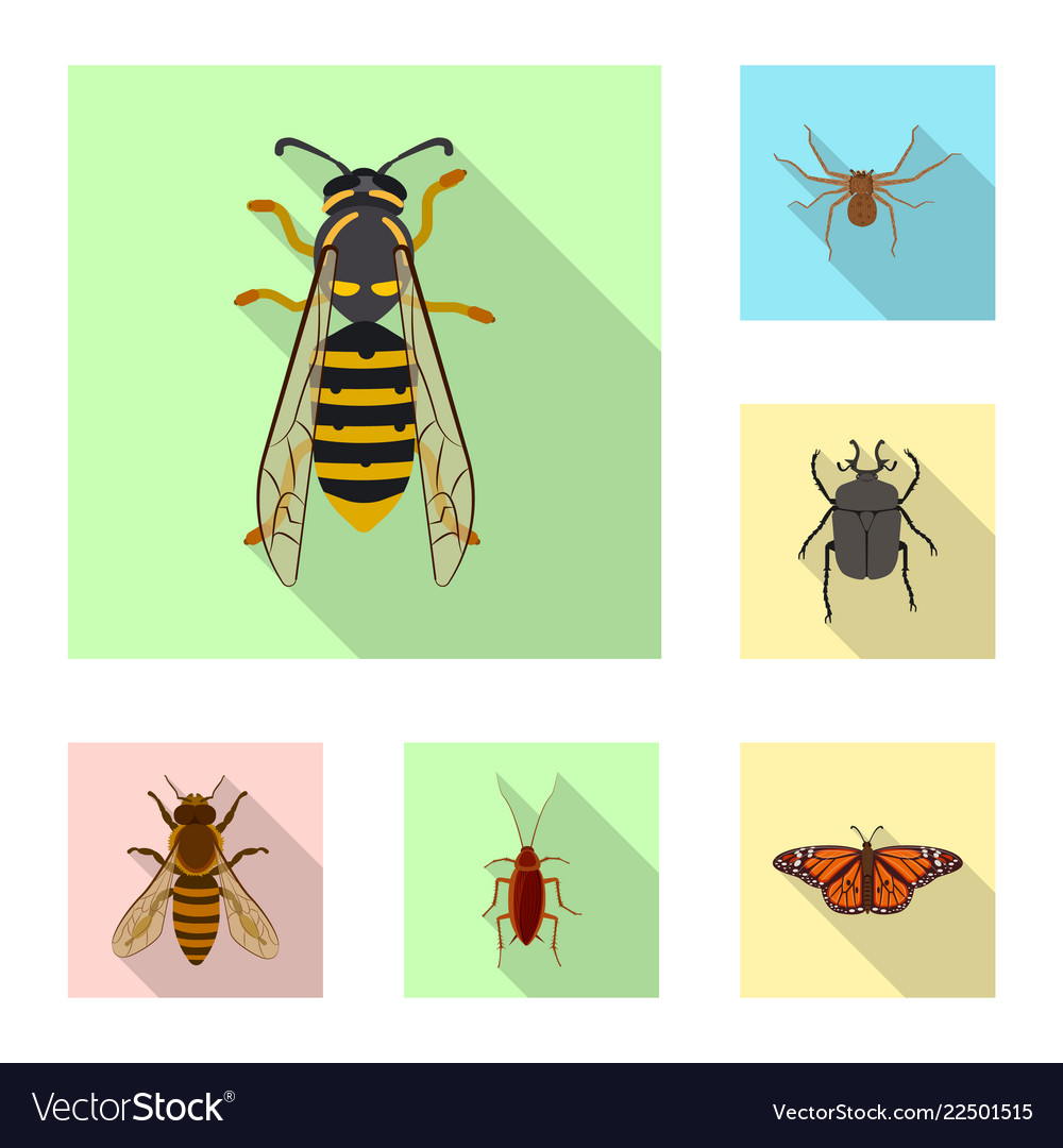 Design of insect and fly symbol collection