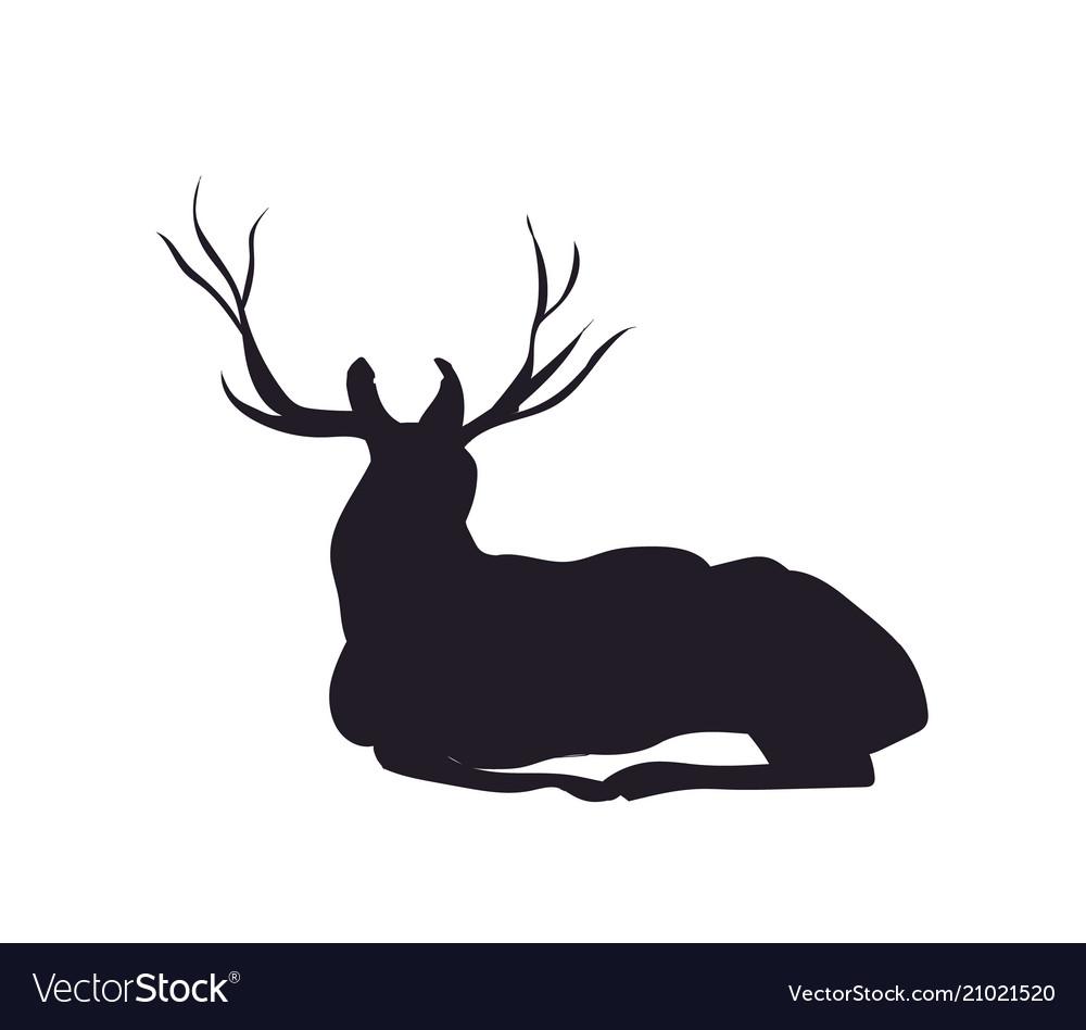 Deer lies silhouette