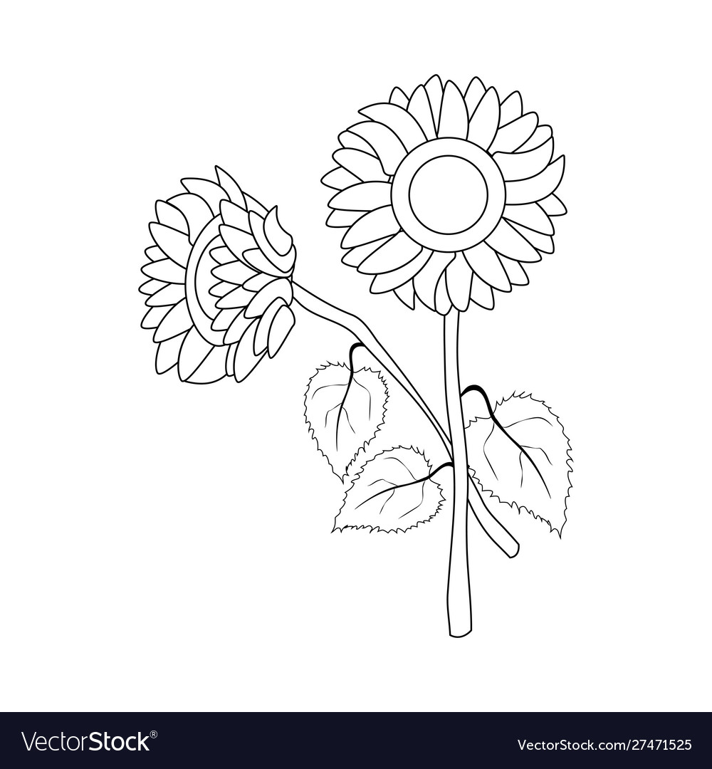 Sunflower Outline – Giant rose petal template free.