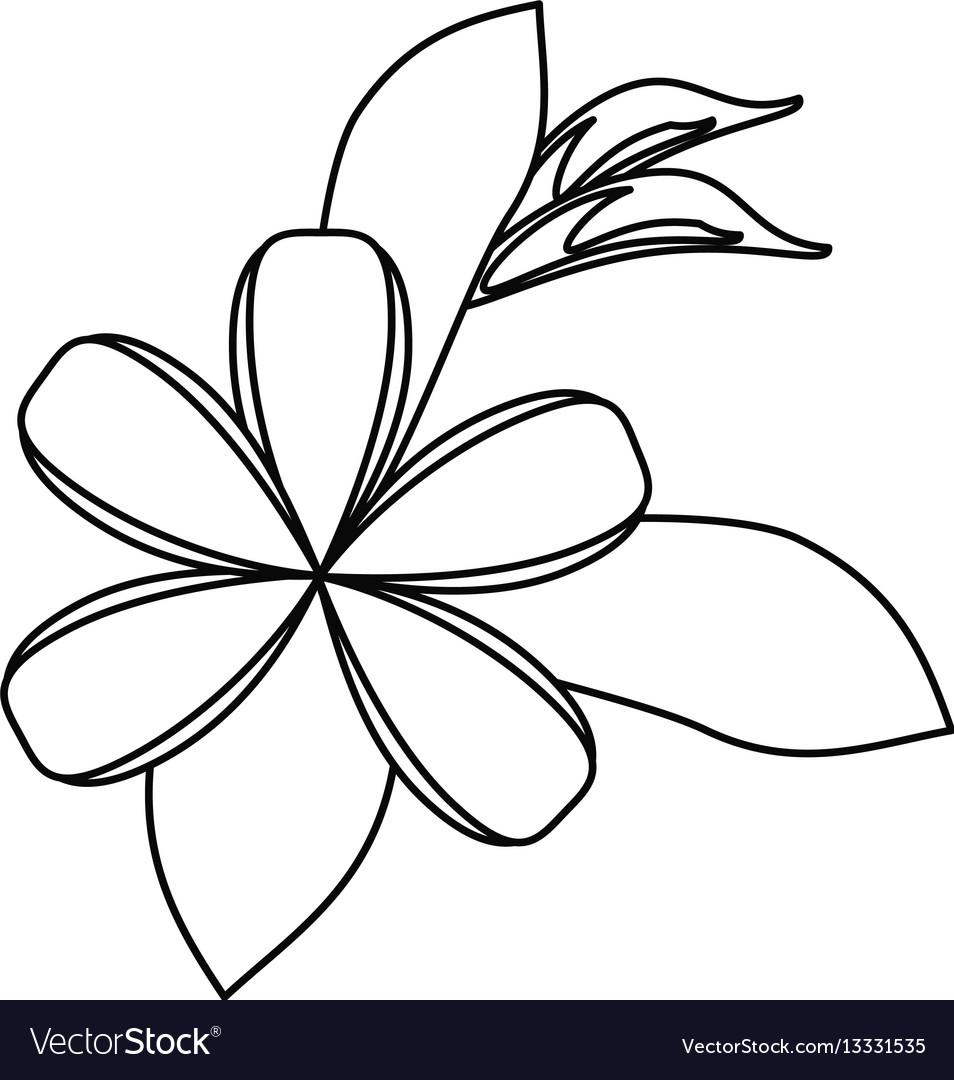 Plumeria flower decoration thin line