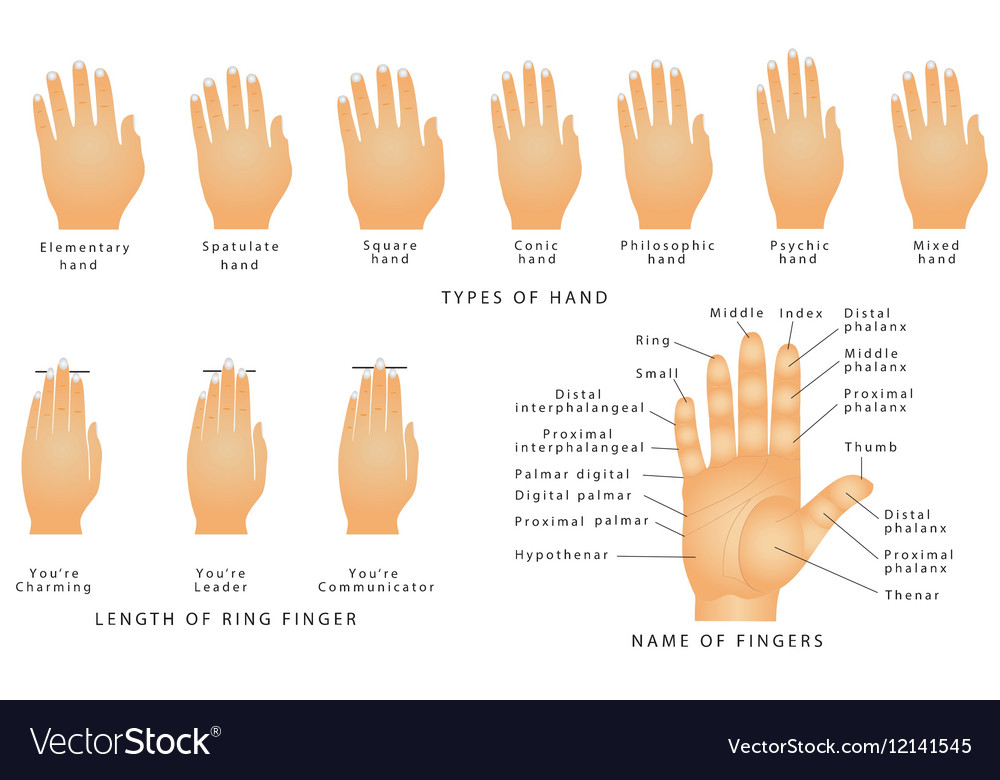 Names of the Fingers Royalty Free Vector Image