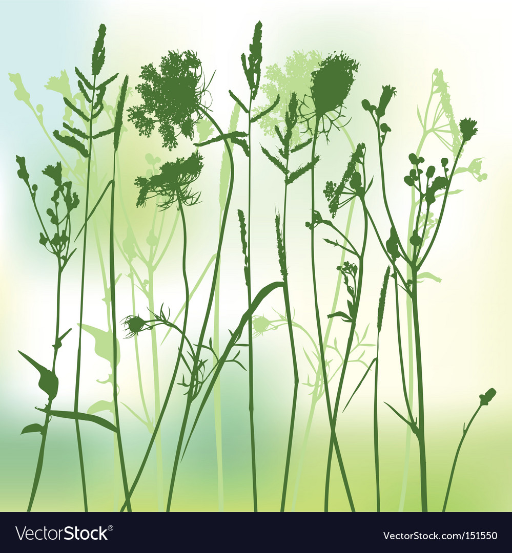 Real grass silhouette two colors vector image
