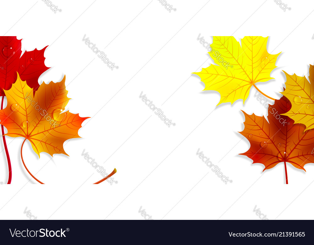 Banner with colorful autumn maple leaves